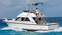 Big Bite - 34' Phoenix - Cancun Fishing Trips